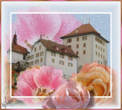 schlossheidegg-rosen2